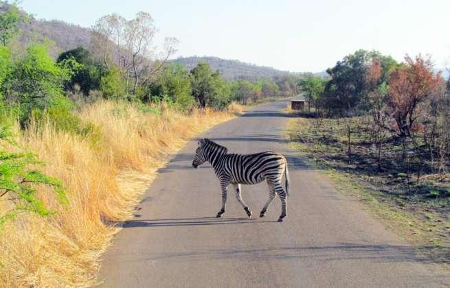 visiterlafrique-visiter-l-afrique-du-sud-image