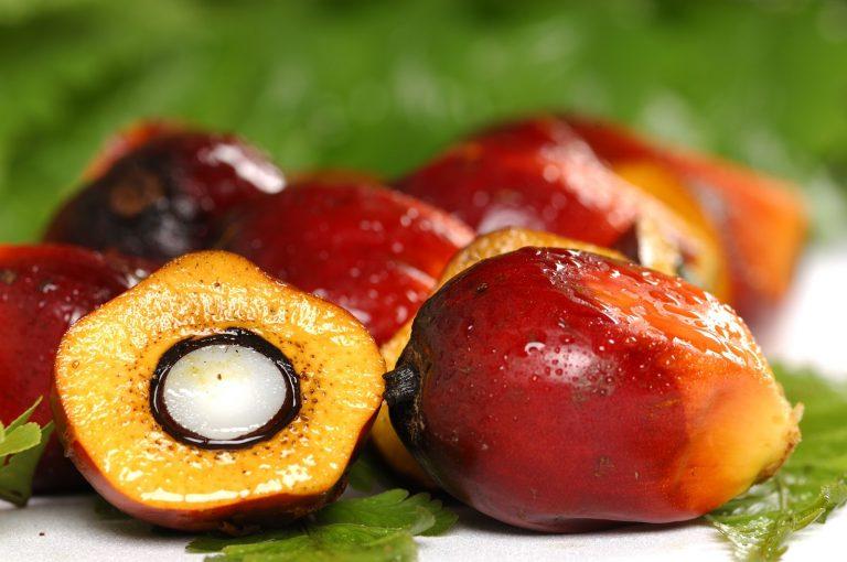 Ce qu'on ne vous dit pas sur l'huile de palme