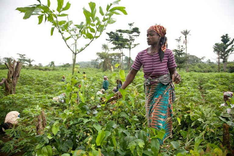 Le role important des femmes dans l'agriculture et la gastronomie africaine