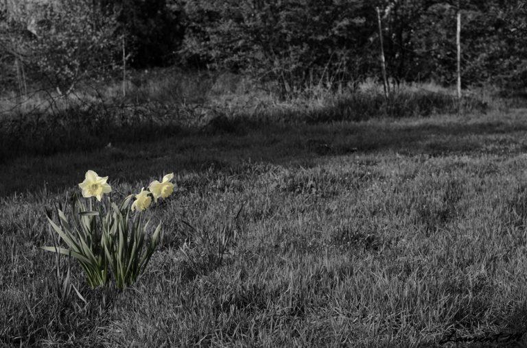Petit Eloge de la rupture sentimentale: Le printemps.