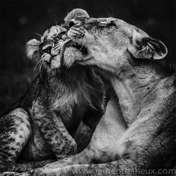 Des clichés sur l'Afrique et ses animaux sauvages
